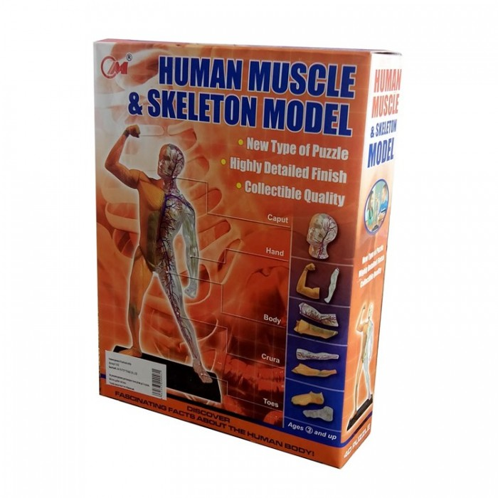 3D пазл Тіло людини